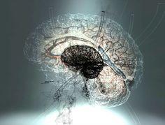 computer art, digital art, graphic design, brain, lung, heart, wireframe, 3d