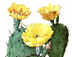 Wall Hanging vintage Botanical Art Print Yellow Flowering Cactus No.8 Southwestern Desert Home Decor Wall Art 8x10 GnosisPictureArchive