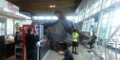 Big earthquake in NZ. The giant eagle hanging from the roof of Wellington airport to promote the Hobbit trilogy has fallen down due to the shake. Photo / Kylie Te...