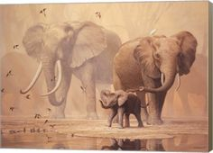 African Elephants and Namaqua Doves Animal Canvas Wall Art Print by Ian Coleman