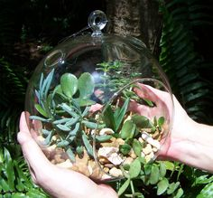 Glass Hanging Terrarium Jumbo Size with Succulents Vertical Gardening DIY House Plants L on Etsy, $37.00