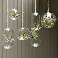 Plants I might not kill!