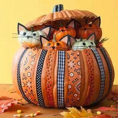 Kittens in the pumpkin.