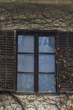 Old style window covered in ivy