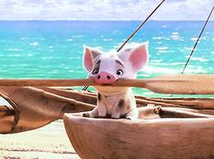 The perfect Pua Moana Pig Animated GIF for your conversation. Moana Disney, Disney Pixar, Disney Sidekicks, Disney And Dreamworks, Disney Characters, Disney Animation, Moana Gif, Funny Disney Cartoons, Disney Magie