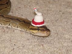 Best images, photos and pictures gallery about snakes with hats Snakes With Hats, Kinds Of Snakes, Baby Snakes, Best Small Pets, Images Photos, Pictures, Cute Snake, Humor, Gallery