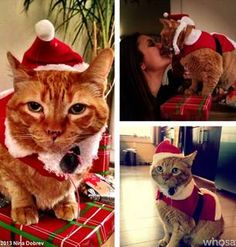 Nina Dobrev Turns Her Cat Into Santa Claws: Vampire Diaries Cute Pic of the Day