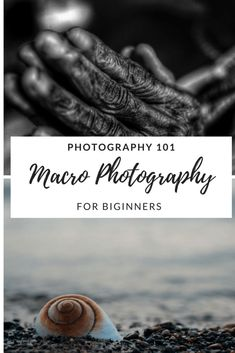 Macro Photography tips for beginners  #photography #photographytalk #macrophotography #beginner