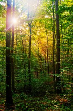 Morning sun in the forest Canvas Print