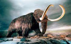 Billedresultat for mammut white background