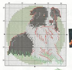 Border Collie Chart