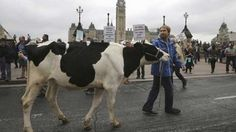 An agreement has been reached on the Trans-Pacific Partnership trade deal, according to officials familiar with the negotiations, Reuters r. Trans Pacific Partnership, Political News, Politics, Animals, Html, Link, 21st Century, Animales, Animaux