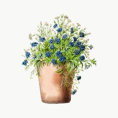 Botanical Drawings, Botanical Illustration, Holography, Plant Wallpaper, Cute Emoji, Printable Designs, Border Design, Watercolor Flowers, Watercolour