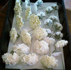 Sugar carnations