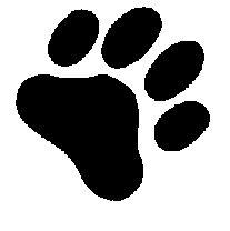 tiger paw print image - Google Search