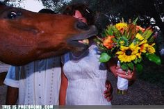 Including pets in your wedding can be a nice thing.  Or not.