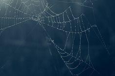 emiko franzen - web
