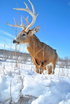 Snowy Sneak by Emily Stauring