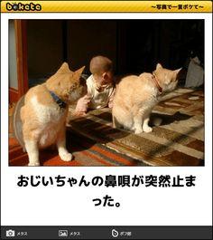 おじいちゃんの鼻唄が突然止まった。 Funny Photos, Funny Images, Animals And Pets, Cute Animals, Japan Funny, Funny Clips, Cat Life, Make You Smile, Cat Lovers