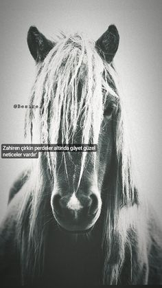 King Horse, Eminem, Cool Words, Horses, Movie Posters, Islamic, Letters, Rage, Quotes