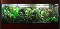 An great planted tank with TMC GroBeam LED lighting http://www.americanaquariumproducts.com/