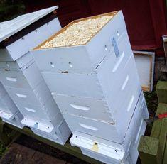 Great beehive winterizing tips Bee Hive Plans, Beekeeping For Beginners, Buzz Bee, Raising Bees, Backyard Beekeeping, Save The Bees, Bees Knees, Queen Bees, Bee Keeping