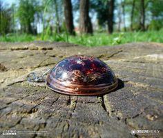 Orgone-Energy Pandantiv Emisferic cu Granat