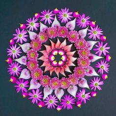 Dānmālā by Kathy Klein - Beautiful mandala art created with fresh flowers and other organic materials, by Kathy Klein an Arizona, USA based-artist. Rangoli Designs Flower, Flower Rangoli, Flower Mandala, Flower Petals, Lotus Artwork, Art Lotus, Mandala Artwork, Mandalas Painting, Mandalas Drawing