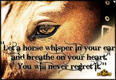 Cowgirl and Horse Sayings | horse whisper quote jpg let a horse whisper in your ear and breathe on ...