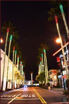 Tweedot blog magazine - Los Angeles Christmas palm at the Grove Farmer's Market