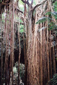 沖縄・ガンガラーの谷