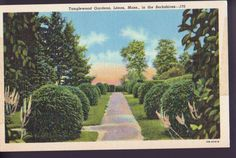 BERKSHIRES LENOX MASSACHUSETTS MA Tanglewood Gardens Vintage Linen Postcard