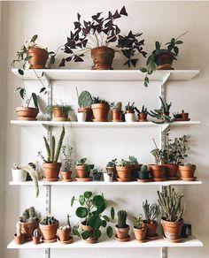This epic #plantshelfie by @folia_folia // #prickleandvine