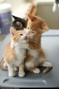 Gatti/Cats ( collection ) ~ Il Magico Mondo dei Sogni
