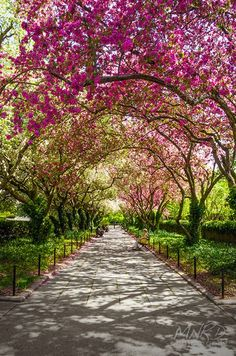 Spring in Central Park Manhattan, New York City