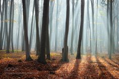 misty morning by RafaSkra. Please Like http://fb.me/go4photos and Follow @go4fotos Thank You. :-)