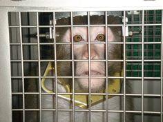 Animals Aren't 'Freight': 9 Ways You Can Help Them | News | PETA Asia