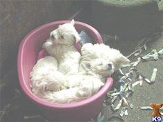 Awwww a basket full of joy