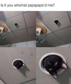- impressive On memes animal , meme , memes , meme. Funny Animal Memes, Cute Funny Animals, Funny Animal Pictures, Cat Memes, Cute Cats, Humorous Animals, Stupid Funny Memes, Haha Funny, Funny Cute