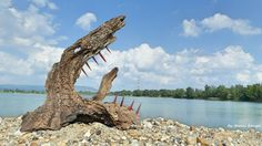 Cirrus clouds chasing driftwood wolf (driftwood art in Hungary by tamas kanya)