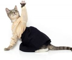 Images, photos and videos tagged with cats in clothes on we heart it / visual bookmark
