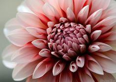 prettylittleflower:    DSC_9343-001 (by kiki nagi)