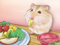 How to Care for Roborovski Hamsters. Roborovski dwarf hamsters are fun-loving, fast, and adorable miniature creatures that usually grow to be four to six centimeters in length. Robo Hamster, Hamster Food, Hamster House, Hamster Breeds, Pet Rats, Pets, Roborovski Hamster, Pet Health, Health Care