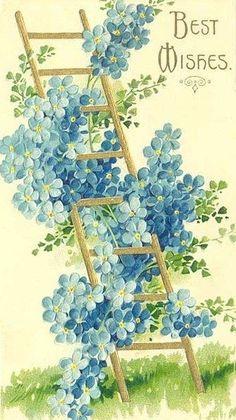 forget~me~not . X ღɱɧღ Decoupage Vintage, Vintage Ephemera, Vintage Birthday Cards, Vintage Greeting Cards, Flower Images, Flower Art, Vintage Pictures, Vintage Images, Vintage Flowers