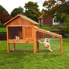rabbit hutch with run - 73 Bunny Cages, Cat Cages, Cage Petit Animal, Rabbit Hutches, Funny Bunnies, Cute Animals, Backyard, Pets, Visible