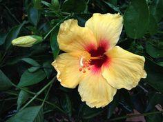 HAWAII | PART 3 | Billabong US