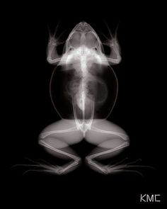 Bullfrog X-Ray