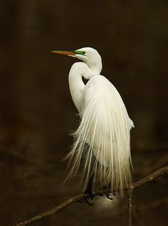 ~~egret bride by amaw~~