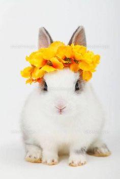 Flower Girl Bunny