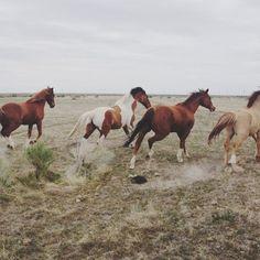 WIld Horses : Kevin Russ